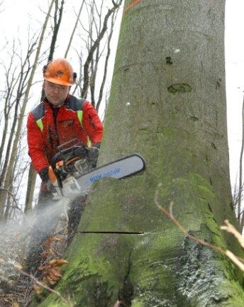 Bereits im Februar wurden im Wilhelm-Wunderlich-Park morsche Bäume gefällt.