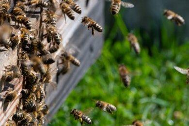 Im Botanischen Garten sollen die Angebote zum Thema Bienen ausgebaut werden.