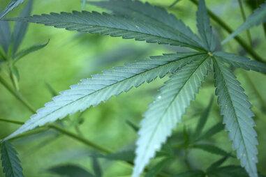 Drogenfund nach Beschwerde über Ruhestörung