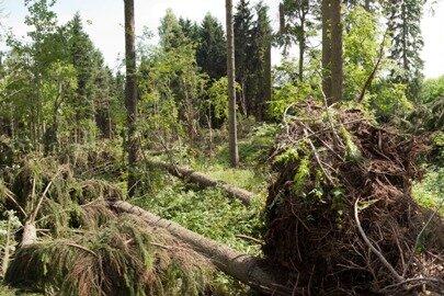 Ein Windhose ist durch ein Waldgebiet in Ehrenfriedersdorf gefegt und hat zahlreiche Bäume umgeknickt.
