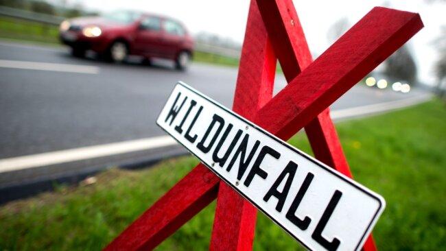 In bis zu 9000 Unfälle jährlich sind in Sachsen Wildtiere verwickelt. Viele Tiere sterben, an Fahrzeugen entstehen teils schwere Schäden.