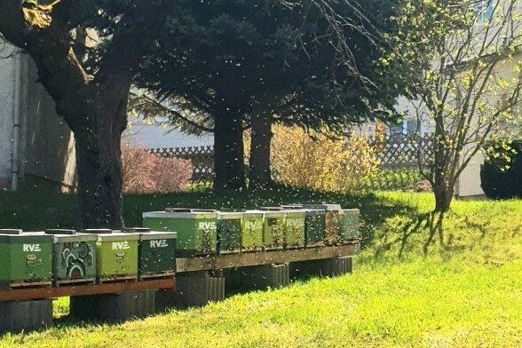 Unternehmen übernimmt Patenschaft für Insekten.