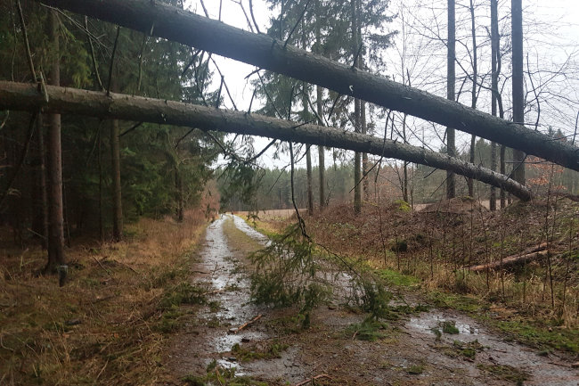 Große Gefahr besteht noch immer in den Wäldern (hier im Bereich vom Burgteich). Umgeknickte Bäume liegen quer über Waldwegen, Bäume können immer noch abknicken.