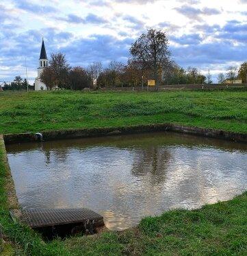 Aus diesem sogenannten Hälterbecken an der Bundesstraße 169 in Greifendorf haben Unbekannte Forellen und Jungkarpfen samt Netzen gestohlen.