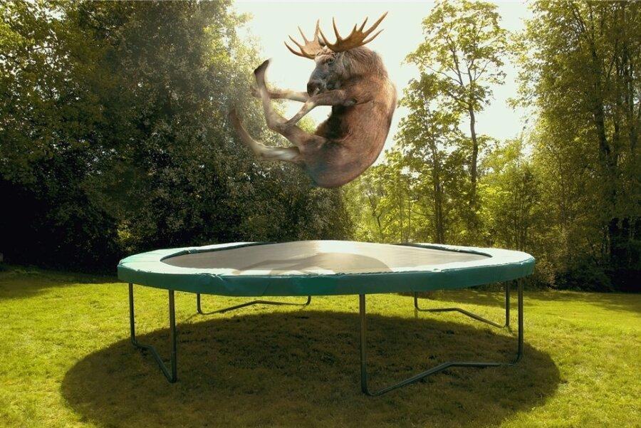 Das Trampolin - Spielwiese auch für große Tiere.