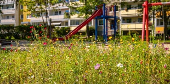 Blumenwiesen sollen für Artenvielfalt sorgen. Die Genossenschaft baut dabei auf die Mithilfe ihrer Mieter.