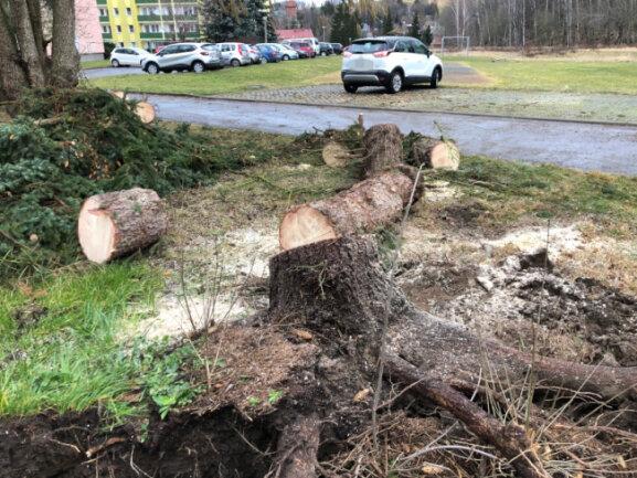 An der Poststraße in Reinsdorf stürzte ein Baum um und traf dabei einen Pkw.