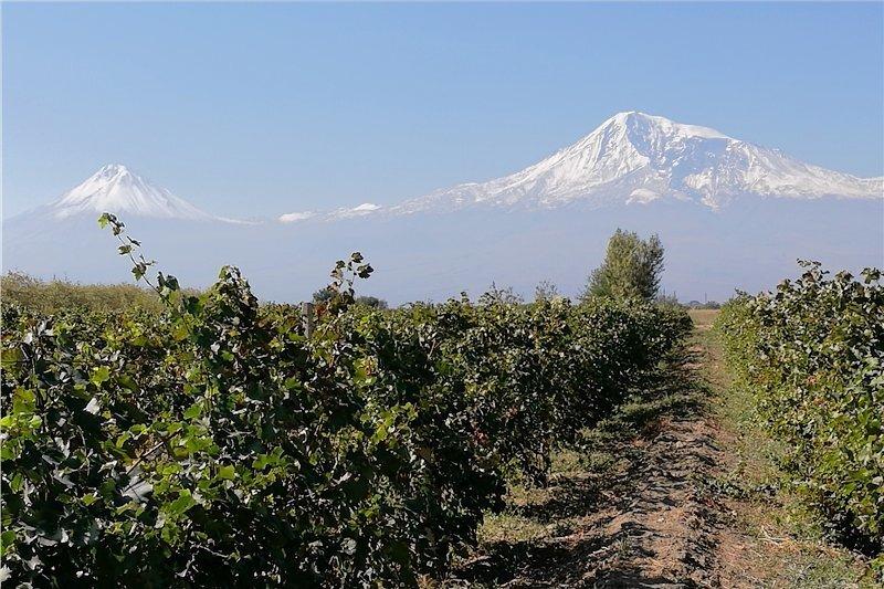 Die Gipfel des Ararat sind das Nationalsymbol von Armenien - obwohl sie sich in der Türkei befinden. Hier irgendwo soll Noah die ersten Reben gepflanzt haben.