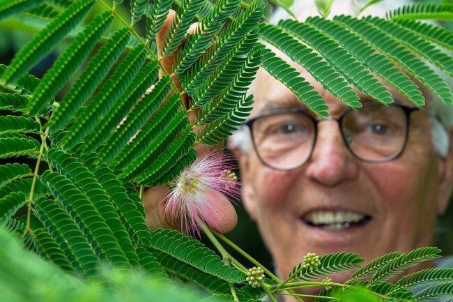 Bernhard Weisbach staunte nicht schlecht, als er nach drei Jahren an seinem Seidenbaum bereits Blüten entdeckte. Ein Hinweis, dass Mittelmeerpflanzen durchaus auch in hiesigen Gefilden gedeihen.