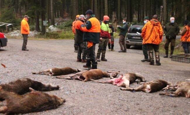 Am Streckenplatz legten die Jäger das erlegte Wild ab, das später von einem Wildhändler abgeholt wird.
