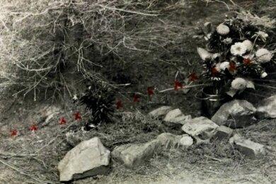 Das Polizeifoto zeigt den Fundort des Skelettes von Dora Ilse Baither. Ihre Leiche war im Hartmannsdorfer Forst abgelegt worden, wo ein Pilzsammler sie im August 1934 fand.