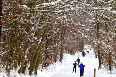 Den Plauener Stadtwald am Essigsteig nutzen jetzt viele Menschen, um frische Luft zu schnappen und den Schnee zu nutzen. Allerdings sollten auch die Bedürfnisse der Wildtiere beachtet werden.