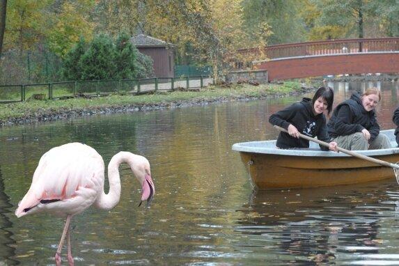 """<p class=""""artikelinhalt"""">Laurine Möbius, ehemalige Praktikantin, sowie die Lehrlinge Juliana König und hinten Franziska Schulze (von links) bei der Reinigung des Tierparkteiches. Dort, wo auf dem Foto mittels Bildmontage ein Flamingo platziert wurde, soll das Gehege entstehen. </p>"""