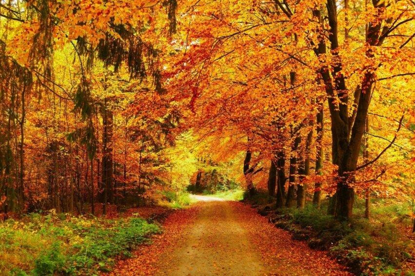 Farbenfrohe Szenerie im Wald