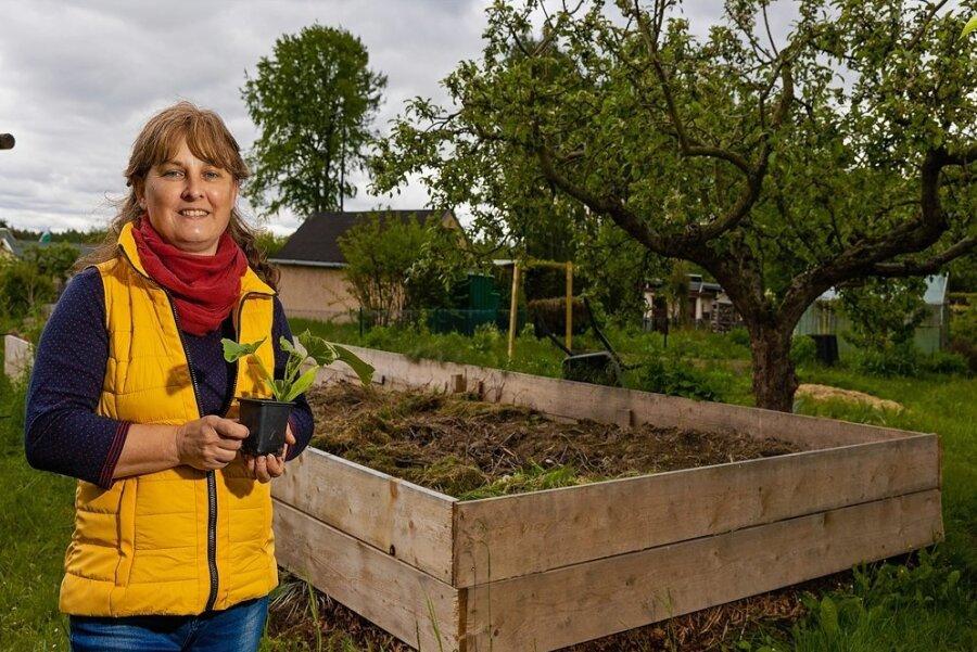 Aus Gartenabfällen der Kleingartensparte entsteht ein riesiges Hochbeet. Katrin Reuter wird anfangs Starkzehrer wie Zucchini darauf pflanzen.