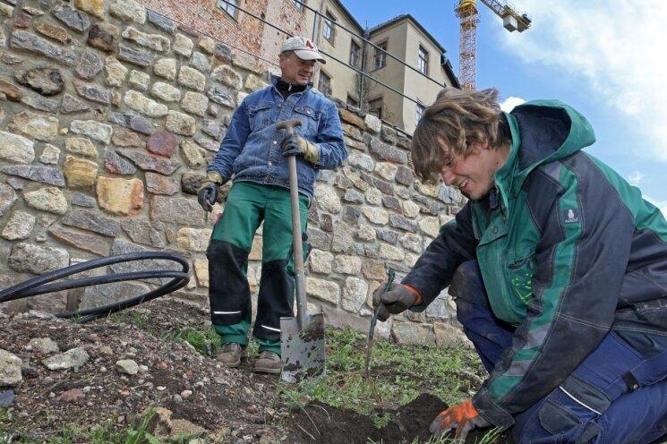 Tobias Seltmann ist Azubi im ersten Lehrjahr und unterstützt den Gartenbaubetrieb Garden Concept Hahn aus Mülsen bei der Bepflanzung des Weinbergs am Schloss.