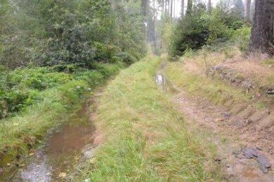 Auf den zerfurchten Waldwegen im Kirchbachtal sammelt sich das Wasser, sie sind kaum begehbar.