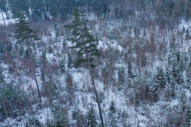 14 Jahre nach dem verheerenden Orkan: Die Freiflächen sind mit Mischwaldkulturen neu bepflanzt worden.