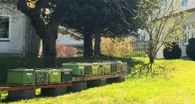 Bienen bei der RVE.