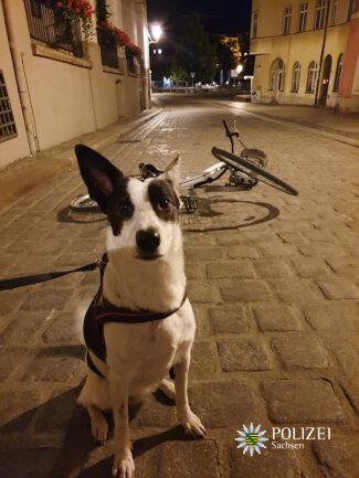 Hündin Lilly mit dem gestohlenen Fahrrad.