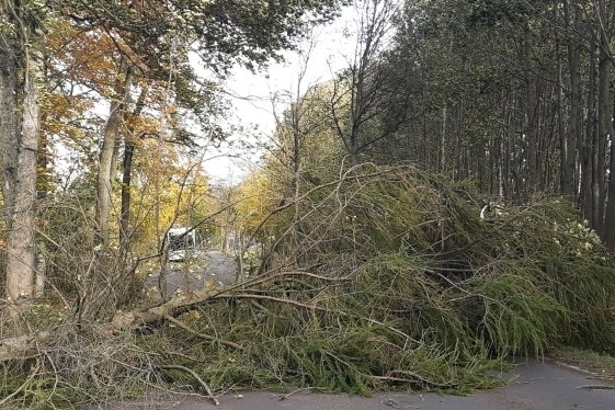 Auf der Bundesstraße 101 lag zwischen Freiberg und Brand-Erbisdorf am Donnerstagvormittag ein Baum quer auf der Fahrbahn.