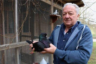 Bernd Renz mit einer seiner Kingtauben. Die Rasse gilt als Rarität. Zudem züchtet der Geilsdorfer wieder Lohkaninchen.
