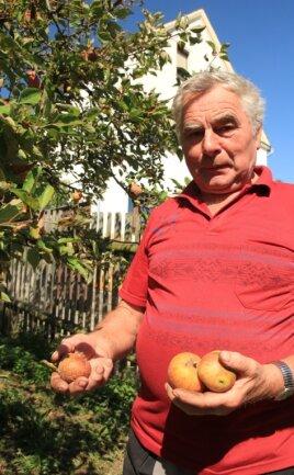 Bis zu zehn Zentner Äpfel erntet Helmut Singer in guten Jahren an seinen acht Apfelbäumen. Dieses Jahr sind es nur ein paar Handvoll Äpfel. Die wenigen Früchte der Sorte Cox Orange faulen schon am Baum.