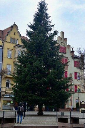 Wieder gerade gerückt: der Weihnachtsbaum auf dem Mittweidaer Markt nach dem Bauhofeinsatz.