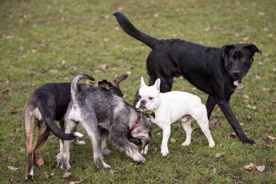 Hundesteuer: Antrag findet im Rat keine Mehrheit