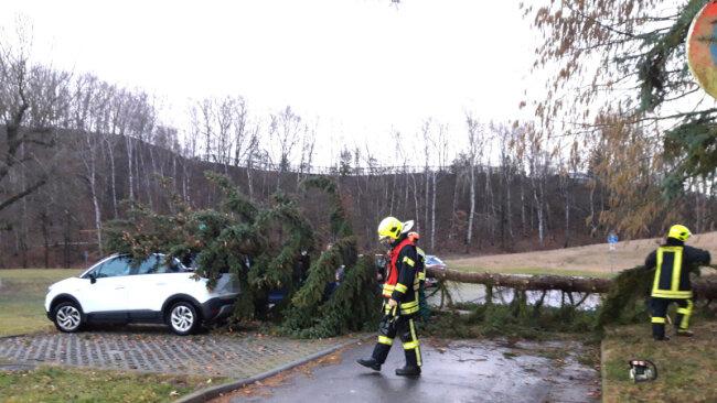 Der umgestürzte Baum wurde von der Feuerwehr entfernt.