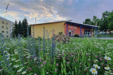 In voller Blüte steht derzeit die Blumenwiese an der Zschopauer Schwimmhalle. Die Idee dazu hatte Kerstin Rümmler, Geschäftsführerin der Grundstücks- und Gebäudewirtschafts GmbH Zschopau.