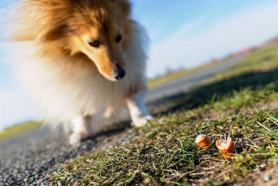 Mit Gift oder Nägeln versehene Köder können für Hunde zur tödlichen Gefahr werden.