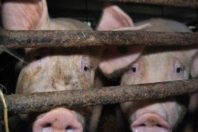 Um ein Auftreten der Seuche früh zu erkennen, bietet der Landkreis Tierhaltern die Teilnahme an einem Überwachungsprogramm an.