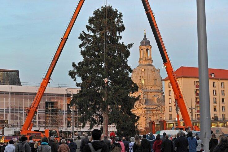 Fichte für Dresdner Striezelmarkt zerbricht beim Verladen - Neuer Baum steht