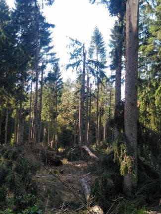 Sturmschäden im Hartmannsdorfer Forst.