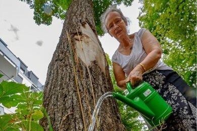 Wasser für gestresste Bäume: Gabriele Schlimbach-Brunner kümmert sich auf dem Kaßberg um die Linden vor ihrem Haus. Allein in Chemnitz gibt es bereits 90 Baumpaten, die sich für das Stadtgrün engagieren.