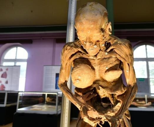 """Ein toter, plastinierter Körper wird in der Ausstellung """"Echte Körper - von den Toten lernen"""" derzeit im Freiberger Schützenhaus gezeigt. Für das Foto hat der Fotograf einen Strahler benutzt. Licht war zur Ausstellungseröffnung in dem Saal nicht angeschaltet. Geöffnet ist die Schau noch bis 6. Oktober."""