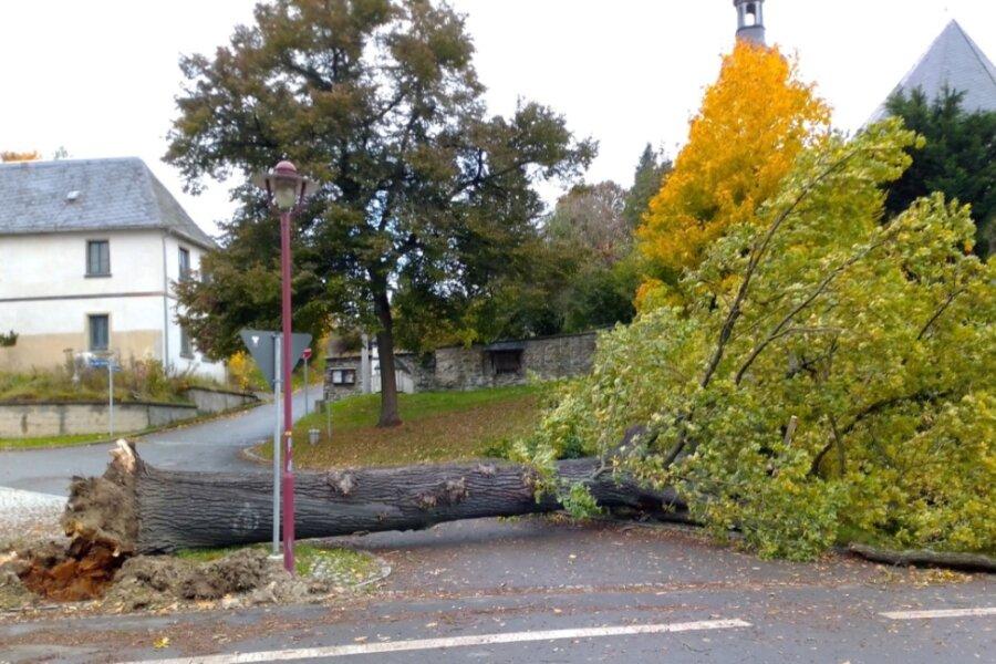Der Sturm hat die Friedenseiche in Bobenneukirchen zu Fall gebracht: Der 150 Jahre alte Baum stürzte gegen 9.30 Uhr auf die Dorfplatz-Zufahrt. Die am 11. April 1871 gepflanzte Eiche war teils morsch gewesen.