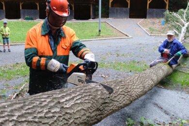 Glück im Unglück hatten die Mitarbeiter am Besucherbergwerk Alaunwerk in Reichenbach. Eine 15 Meter lange Eiche wurde beim Sturm am Mittwochnachmittag umgeworfen. Zum Glück blieben die Holzhäuschen und der Stromkasten unversehrt.