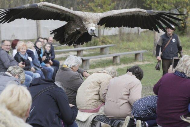 Falkner: Plauen als Standort auf Kippe
