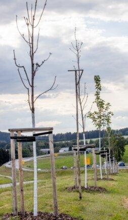 Viele der Bäume zwischen Schönfeld und Ehrenfriedersdorf hatten kein langes Leben.