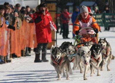 """<p class=""""artikelinhalt"""">Lusie Wegnerova (Tschechische Republik) bestritt ihr Rennen am Samstag mit acht Sibirian Huskies vorm Schlitten. </p>"""