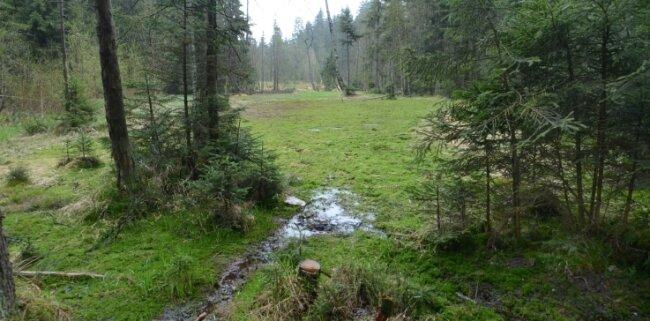 Blick ins Hochmoor. Ein neuer Damm schützt vor dem Austrocknen.