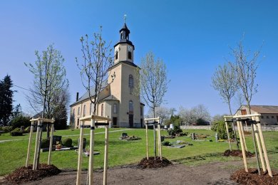 Neupflanzungen auf dem Grumbacher Friedhof: Blühbäume für Insekten und die Fledermäuse im Kirchturm