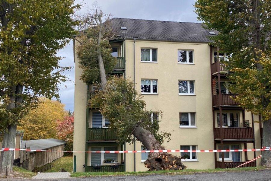 An der Dietrich-Bonhoeffer-Straße in Glauchau krachte dieser Baum gegen das Wohnhaus.