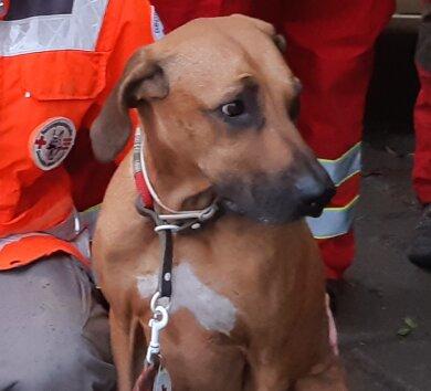 Ein Rettungshund verfolgte die Spur des Vermissten und fand ihn schließlich.