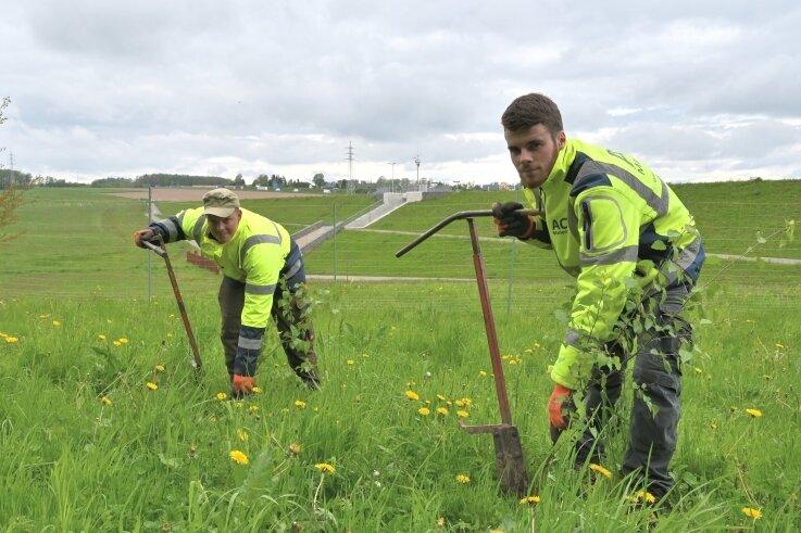 Rund um das Hochwasserrückhaltebecken in Neuwürschnitz werden Pflanzungen vorgenommen - im Bild Danny Brödner (li.) und Fabian Hildenbrandt von der ACZ Marienberg GmbH.