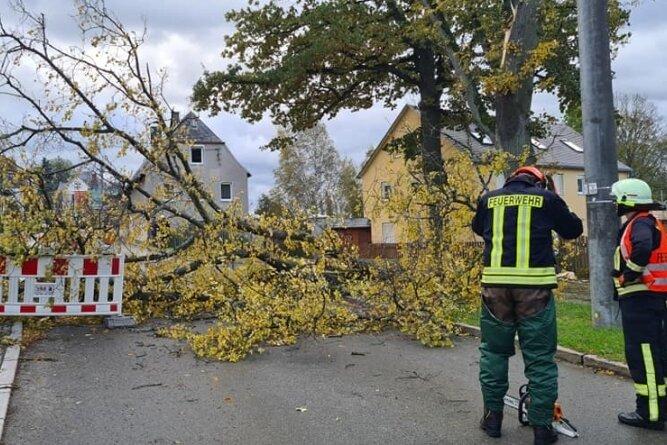 In Rotschau verursachte ein umgekippter Baum einen stundenlangen Stromausfall.