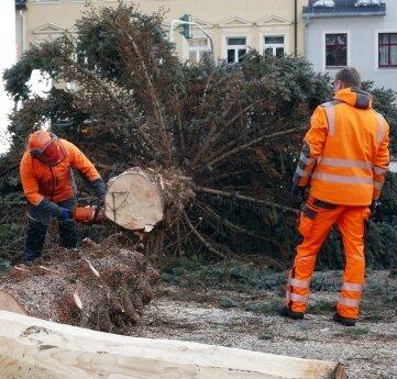 Per Kettensäge wurde der Zschopauer Baum zerkleinert.
