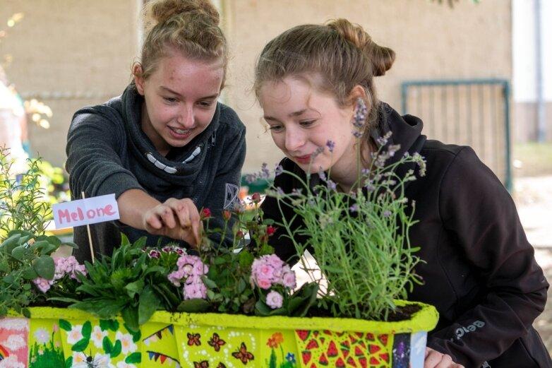 Schüler gestalten Blühendes für den Balkon